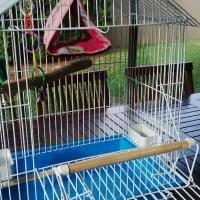 BIRD CAGE MEDIUM SIZE