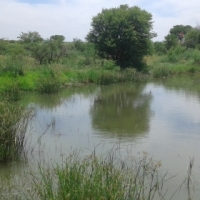 1.5ha Plot 17km from Koppies Free State