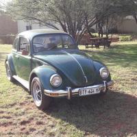 V W Beetle