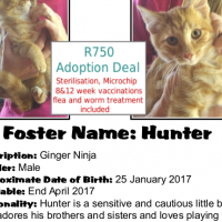 Be part of this happy rescue story! Adopt 'Hunter' - A CatzRUs Kitten.