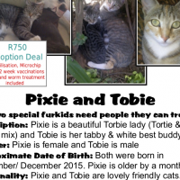 """We want a home where we won't need to move again!"" Pixie and Tobie - a CatzRUs double rescue!"