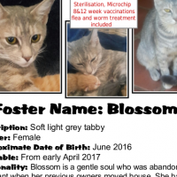 Because her life matters - Blossom - a CatzRUs life-saving rescue!
