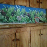 2m Fish Tank for sale with external filter