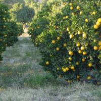 7 Houses Citrus farm with Workshop