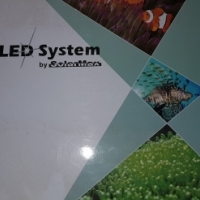 L.E.D Lights