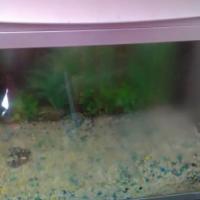 Medium size Fish Tank - .580 x .300 x .480