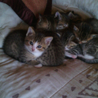 9 week old Kittens for sale to good home