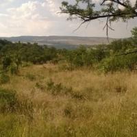 Wildsplaas in Potchefstroom distrik
