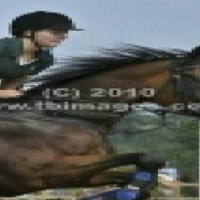 Thoroughbred mare for sale