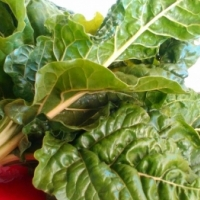 Big Bunches of Fresh Spinach (Swiss Chard) available in Ritchie