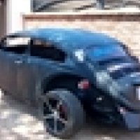 Beetle radrot for sale