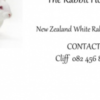 6 week old New Zealand white Rabbits for sale