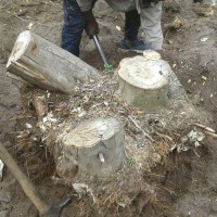 KNOWLE TREE SERVICES-stumps removal on yards