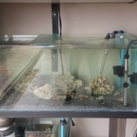 4 ft marine tank for sale  Urgent sale  price drop