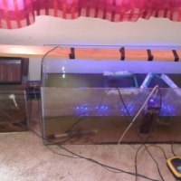 Complete 3 ft & 1.5 ft Tanks for sale