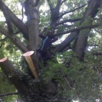 Tree cutting Fradfort 0607521660 , tree felling company