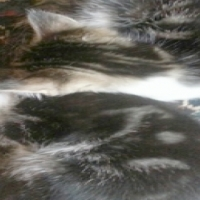 A CatzRUs Happy Rescue Story: Maggie and Jack. Cost incl Sterilisation, Microchip etc.