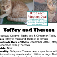 Toffey and Theresa - a special pair of furfriends from CatzRUs - these two need a quiet loving home.