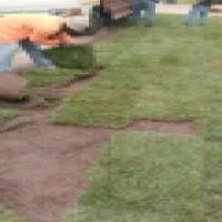LM, Evergreen, Kikuyu Lawn & Manures