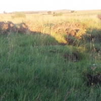 URGENT FARM SALE - SITUATED IN HEILBRON DISTRICT