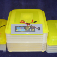 QUAIL Egg Incubators. Automatic & Manual