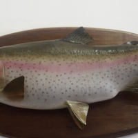Mounted Rainbow Trout Fish