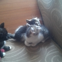 4 Beutyfull kittens for loving homes.