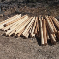 Poles - Fresh Cut Gum, debarked, hard and dense wood with a natural look