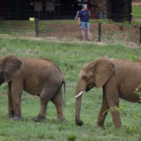 Bakubung Bush Lodge Pilanesberg 14-21 July 2017