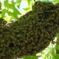 Bee relocation and related services