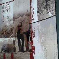 Elephant wall hangings
