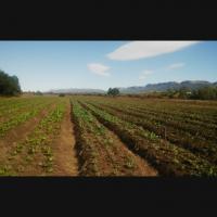 Beautifull Farm for sale 105 ha hartbeespoort