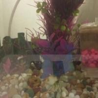 small fish tenk
