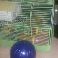 Hamster hok en hardloop bal