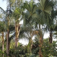 Palms, Cycads and other plants for sale