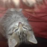 Kitten availablr