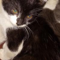 2 Lovely Kittens for Sale