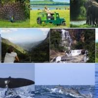 Sri Lanka tours - private & customized