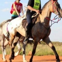 Appaloosa gelding for sale/for lease