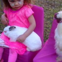 Rabbits more than 6 weeks old