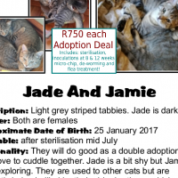 Sister-Love! Jade and Jamie need a forever-family. A CatzRUs Rescue and re-home.