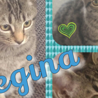 Regina - Purring is my middle name. Regina is such a lovely success story! A CatzRUs Rescued Kitten.