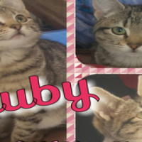 Ruby - one of the most rewarding foster kittens ever! A CatzRUs rescue and rehome.