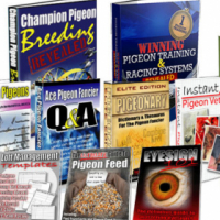Champion Racing Pigeon Info Products