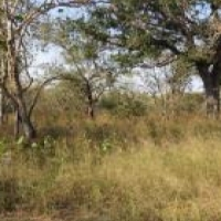 Property in Marloth park to swap for 4x4 vehicle