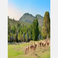 Krugerpark lodge