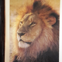 """ STUNNING "" Lion Jigsaw Framed Large"