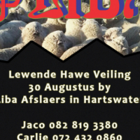 Huge livestock auction Wednesday 30 August at Liba Hartswater