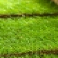 Instant lawn ,lawn dressing, topsoil delivered