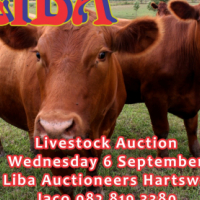 Livestock auction Wednesday 6 September